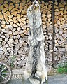 Timber wolf fur skin (back side 1).jpg