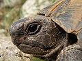 Tortoise portrait.JPG