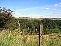 Towards Murton Wood - geograph.org.uk - 191966.jpg