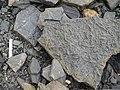 Trace Fossils at Blue Beach in Nova Scotia.jpg