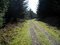 Track in Dalbeattie Forest - geograph.org.uk - 392851.jpg
