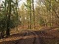 Track through Knockalls Inclosure - geograph.org.uk - 1725891.jpg