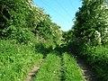 Track to Danebury Manor - geograph.org.uk - 1330207.jpg