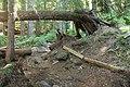 Trail (11425555473).jpg