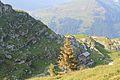Trail to Silberenalp - panoramio (86).jpg