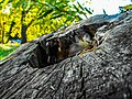 Tree by akosmediaofficial.jpg