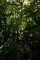 Tropical glance.jpg