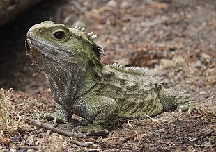 reptile - Wiktionary