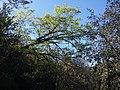 Tuolumne County, CA, USA - panoramio (22).jpg