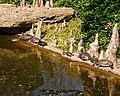 Turtles and Cypress Knees (5551975890).jpg