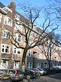 Ulmus glabra Cornuta (amsterdam milletstraat) 030223f.jpg