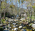 Upper Santa Anna Creek, Seven Oaks 4-14 (20769225669).jpg