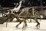 Utahceratops gettyi 3 salt lake city.jpg