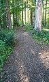 VD 7.1.1 Bois des Dailles.jpg