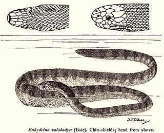 Venomous snake - WikiMili, The Free Encyclopedia