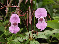 Valley of flowers National Park 22.JPG