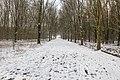 Veel voetsporen in de sneeuw in het mallebos.jpg