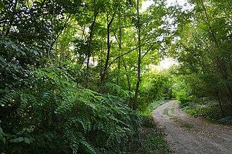Lipcani - Image: Vegetație forestieră din Lipcani