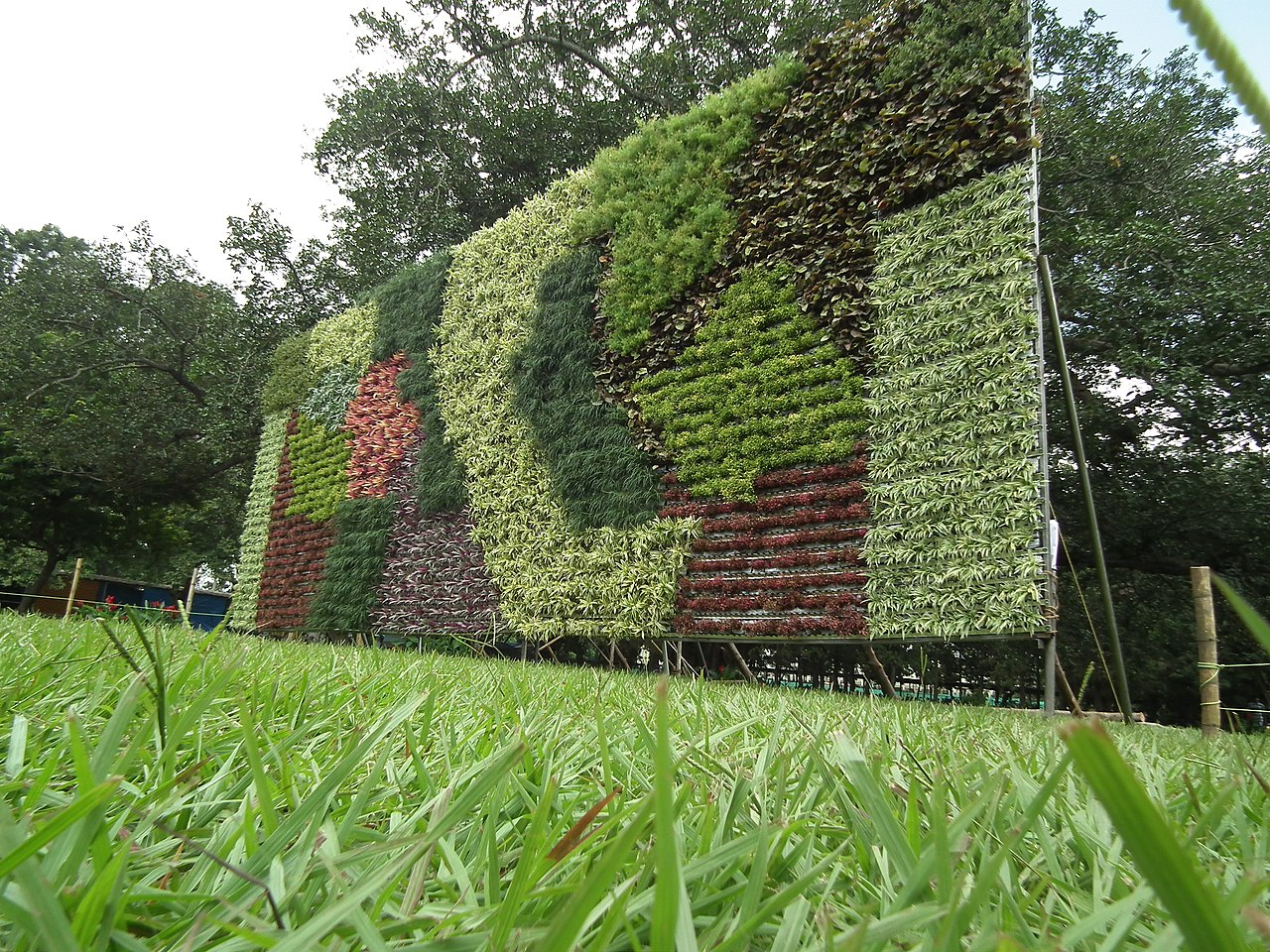 File Vertical Garden From Lalbagh Flower Show Aug 2013