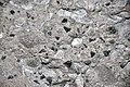 Vetulonaia sp. (fossil clams) in pebbly sandstone (Morrison Formation, Upper Jurassic; Carnegie Quarry, Dinosaur National Monument, Utah, USA) 3 (48771236183).jpg