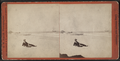 View at the Beach, from Robert N. Dennis collection of stereoscopic views.png