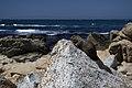 View of a squirrel at Bird Rock at Pebble Beach, California.jpg