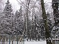 View to the winterforest. January 2014. - Вид на зимний лес. Январь 2014. - panoramio.jpg