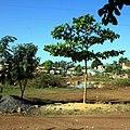 Vinales - panoramio.jpg
