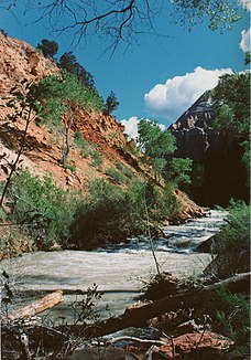 North Fork des Virgin River im Zion-Nationalpark