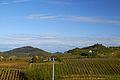 Vista verso Montalto - panoramio (4).jpg
