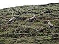 Vltures 01.jpg