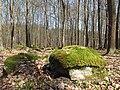 Voděradské bučiny na jaře (003).JPG