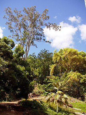 Wahiawa Botanical Garden - General View.JPG