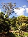 Wahiawa Botanical Garden - General View.JPG