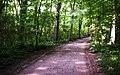 Waldweg, Stadtwald, Neuss (CherryX).jpg
