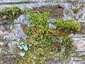 Warszawski Ogród Botaniczny - Ruiny Świątyni Opaczności - 10.jpg