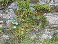 Warszawski Ogród Botaniczny - Ruiny Świątyni Opaczności - 11.jpg