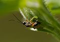 Wasp-pjt.jpg