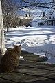 Watching the bird feeder (395953900).jpg