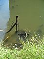Water Quality Sensor Probe (268801194).jpg