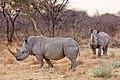 Waterberg Nashorn1.jpg