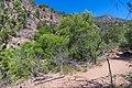 Waterfall Trail on Fossil Creek (29471742973).jpg