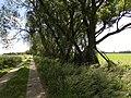 Weg durch die Diedersdorfer Heide - panoramio.jpg