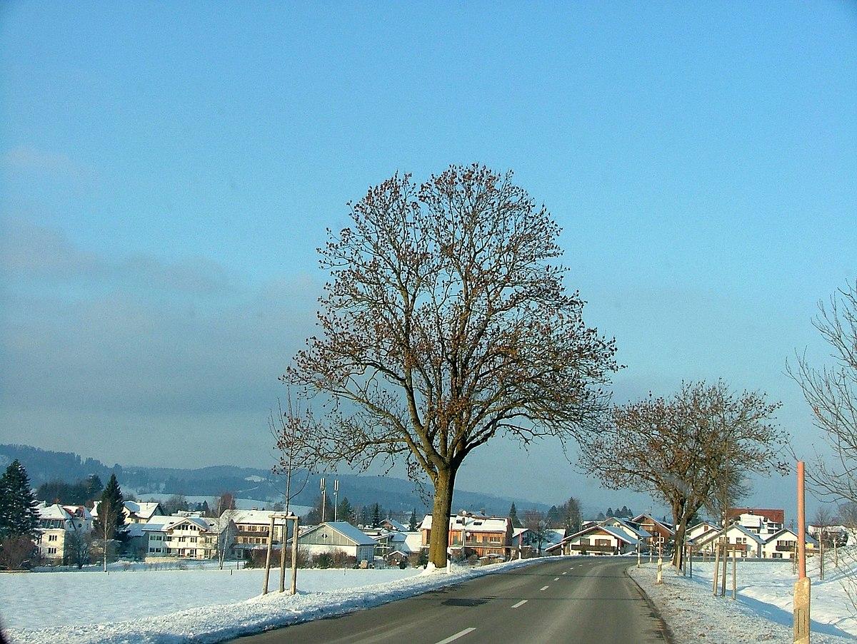 Weibliche Esche,im Winter erkennbar an den Samen und Samenblätter - panoramio.jpg
