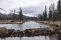 Wetlands outside Pedro Bay (b7b6436d-b61f-486b-9fda-458fa7bcae19).jpg