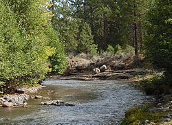 Whychus Creek in Sisters State Park, Oregon.jpg