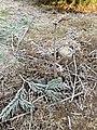 Winter frost in Oregon.jpg