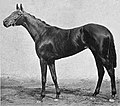 Witch Elm (horse).jpg