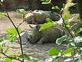 Witte neushoorns.JPG