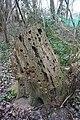 Woodpecker Stump - geograph.org.uk - 724622.jpg